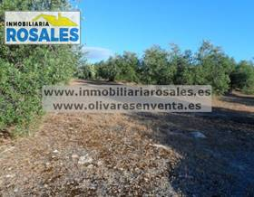lands sale in baena