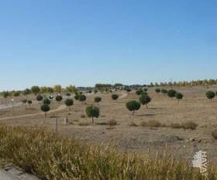 lands sale in guadalajara province