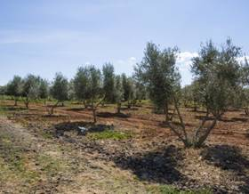 lands sale in ciudad real province